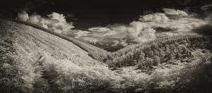 glen_urquhart_forest